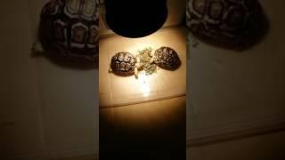 可爱的小龜