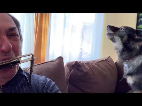 Little Bear Dog Blues - Voja & Poppy