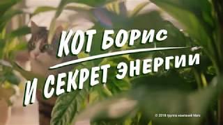 Кот Борис и секрет энергии