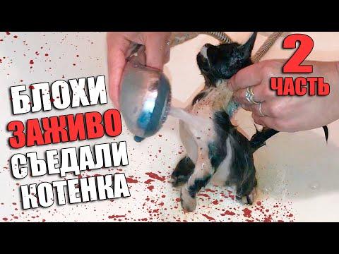 Спасение котенка. Котенок нашел дом / SANI Vlog