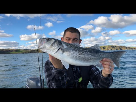Lure Fishing Bass And Pollack - Sea Fishing UK