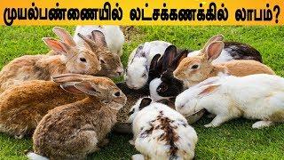 முயல் முடி 150கிராம் 1000 ரூபாய் | முயல் பண்ணை தொடங்க ஆர்வமா? | muyal valarpu | Rabbit farming