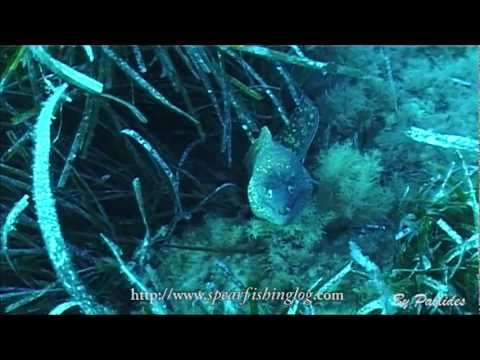 My Friend The Moray | Freediving With