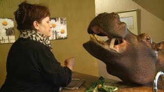 Nijlpaard Jessica ontbijt mee aan tafel | Luxebeesten | VTM
