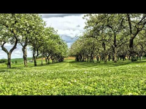 Maria Grinberg - Mozart - Fantasia in C minor, K 396