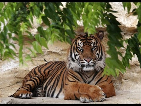 Top 10 Best Zoos In The United States of America