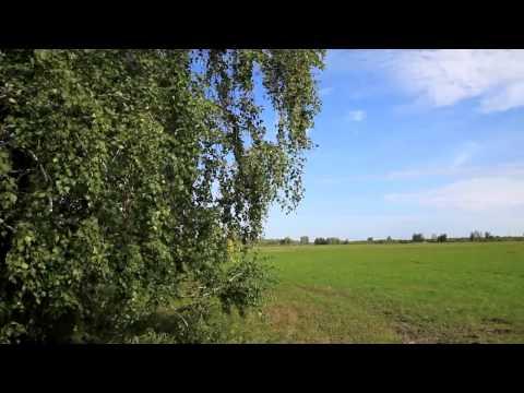 Лето природа новосибирской области 2013