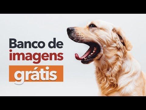 7 Banco de Imagens Grátis para você Baixar Imagens!