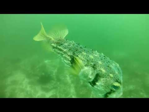 Australia - Byron Bay Julian Rocks dive 2 - Sept 2017