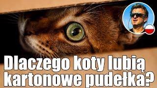 Dlaczego koty lubią kartonowe pudełka? | Polski Samuraj mówi o...