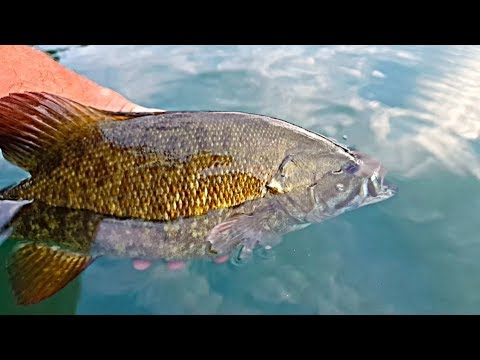 How To Catch Smallmouth Bass The Easy Way