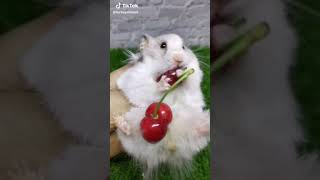 Cute Squirrel Video On Tiktok