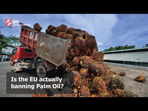 Is the EU actually banning Palm Oil?