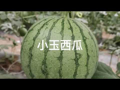 臻善農業 zen organic