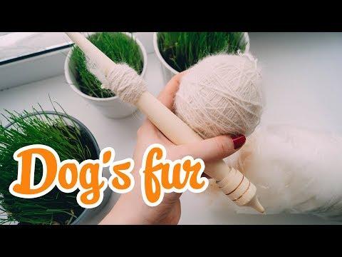 Как спрячь собачью шерсть в домашних условиях видео