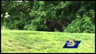 Black bear still on the loose, officials encourage precaution
