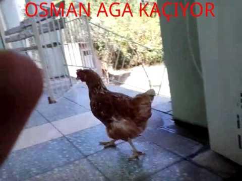 OSMAN AGA TR