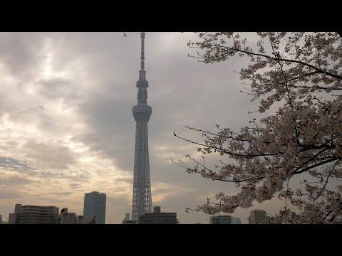 【4K】Morning Walk From Minami-Senjyu To Asakusa During Sakura Bloom