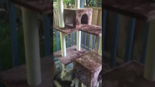The rapture kitty got his mansion early!