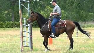 Magic - Quarter Horse gelding