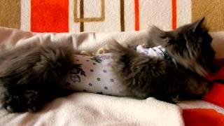 кошка после стерилизации.MOV