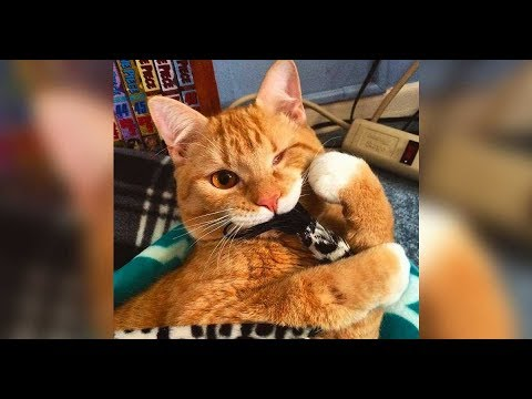 Woman asks shelter for cat with  special needs Here's who they gave her