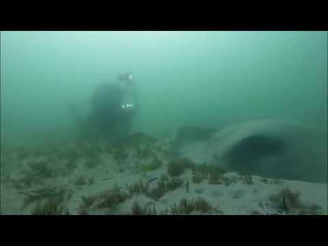 Longbeach Deep: diving with huge stingrays!