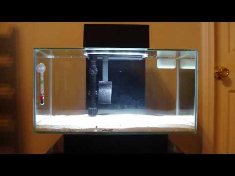 Fluval Edge Saltwater Aquarium Help