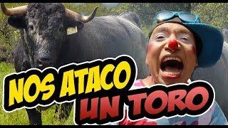 NOS ATACO UN TORO !!!!!!