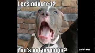 Killer Cute Dogs Video Rap