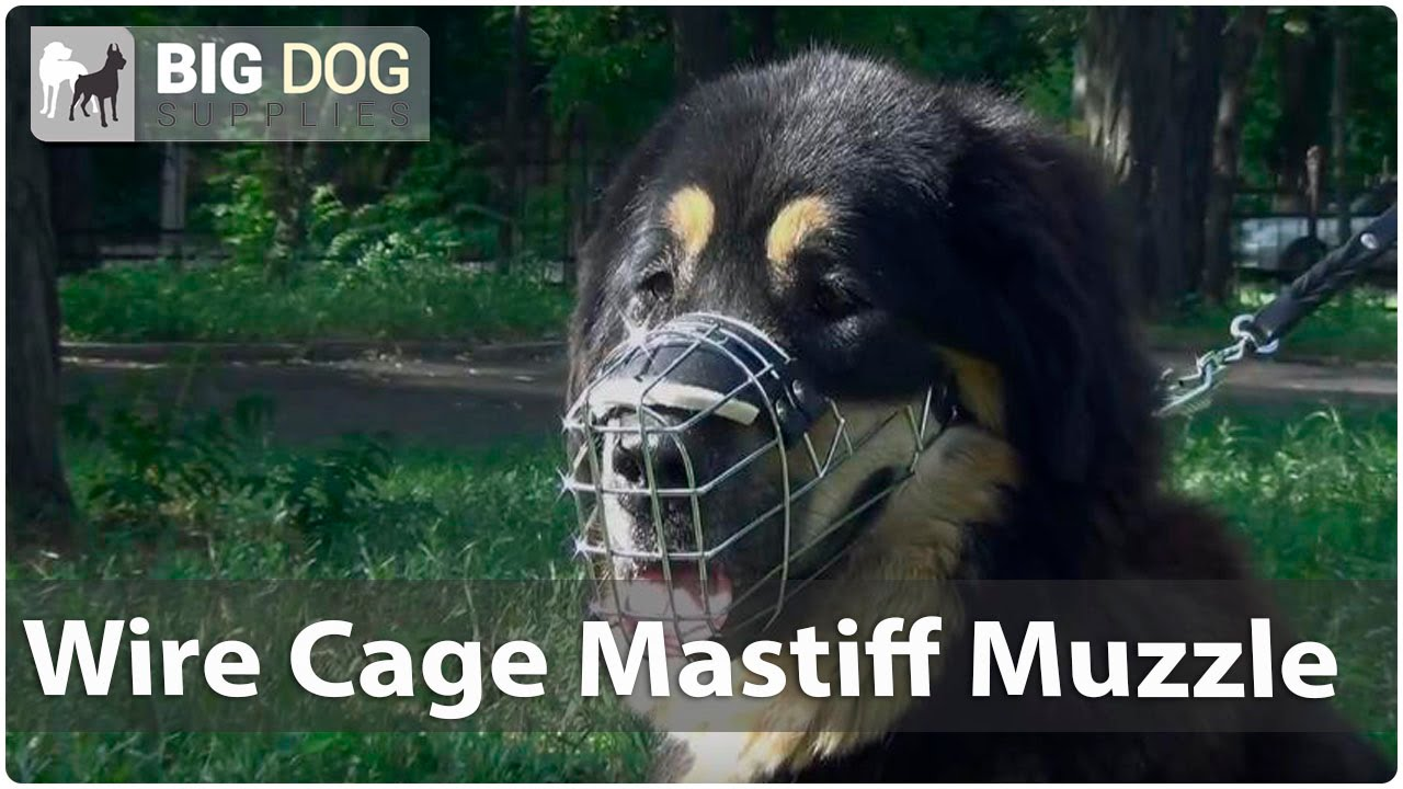 Mastiff in Wire Cage Dog Muzzle with Padded Nose Area - YouTube