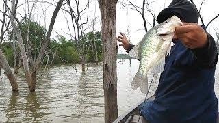 Crappie Fishing Jigging Trees. EP 14