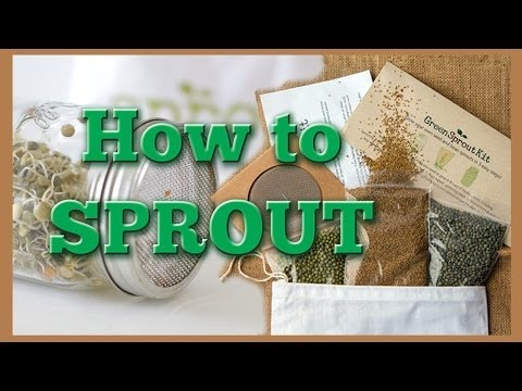 Sprouting Seeds: How to Sprout with a Mason Jar