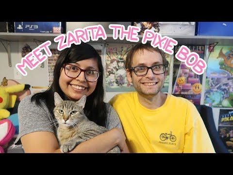 Meet Zarita the Pixie Bob | NeobearTV
