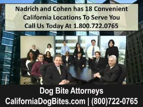 California Dog Bite Attorneys and Lawyers