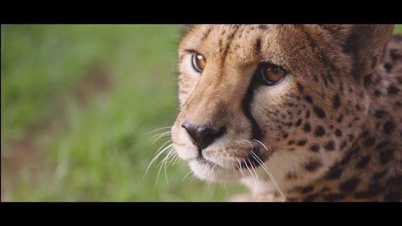 Jamala Wildlife Lodge - Canberra  60s TV ad