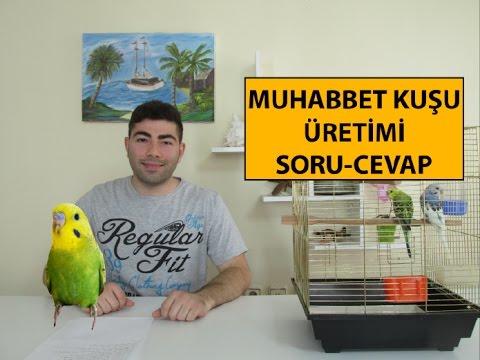 Muhabbet Kuşu Üretimi Soru Cevap