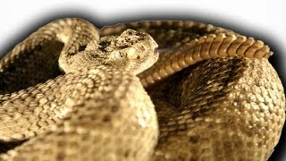 Slow motion rattlesnake - Slo Mo #3 - Earth Unplugged