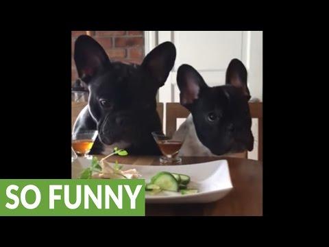 Fussy Frenchies refuse to eat their veggies
