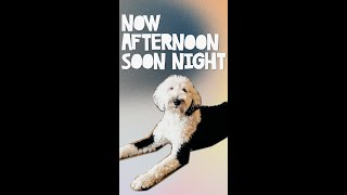 Now Afternoon, Soon Night! | What About Bunny