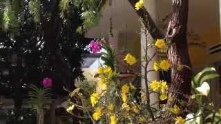 Sân vườn của Trà My ngày Xuân