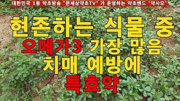산야초 동의보감, 오메가3 풍부한 치매예방 특효약초