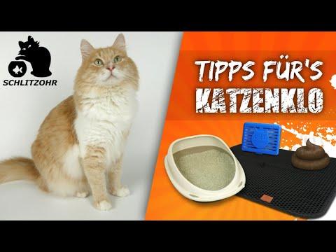 🔥5 Katzenklo Tipps | Katzenstreu In Der Wohnung | Katzenstreu Matte | Katzenklo Gerüche Reduzieren
