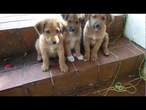 Cute stray puppies need homes.