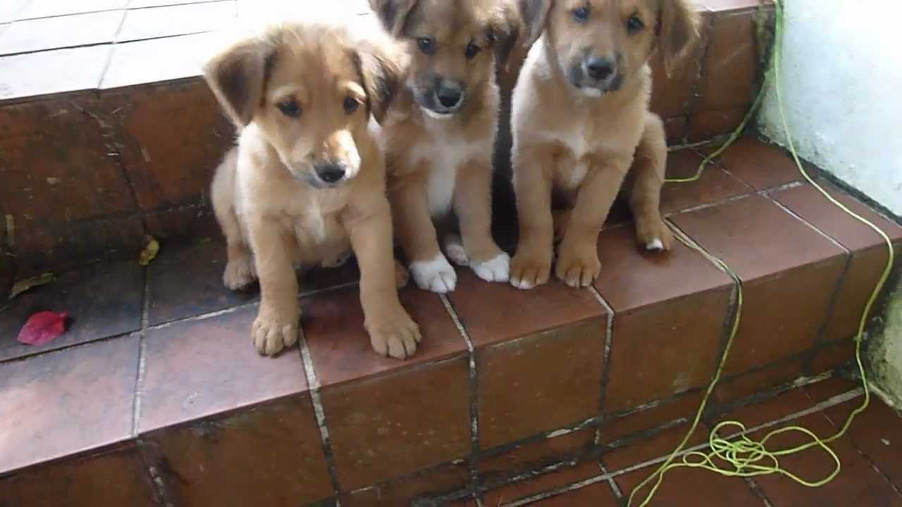 Cute Stray Puppies Need Homes Youtube