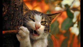 Смешные кошки 2019 Новые приколы с котами до слёз, смешные коты приколы апрель 2019 funny cats #56