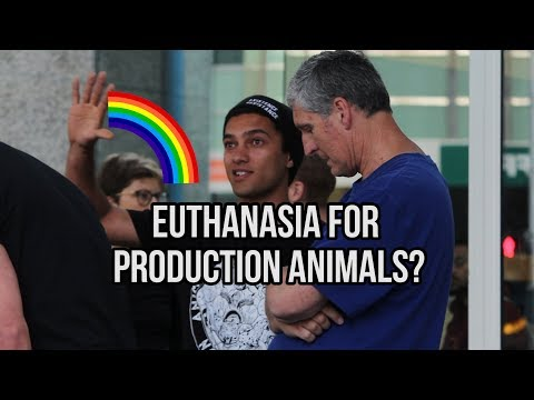 Euthanasia for humane killing? - Cube of Truth