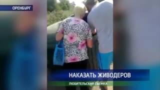 На Беляевской в мусорный бак выбросили живую собаку в мешке