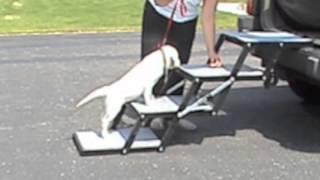 Pet Loader - Training Your Dog