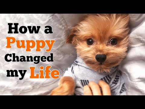 How a Puppy changed my Life